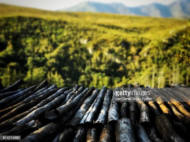 Stack Of Wood Outdoors