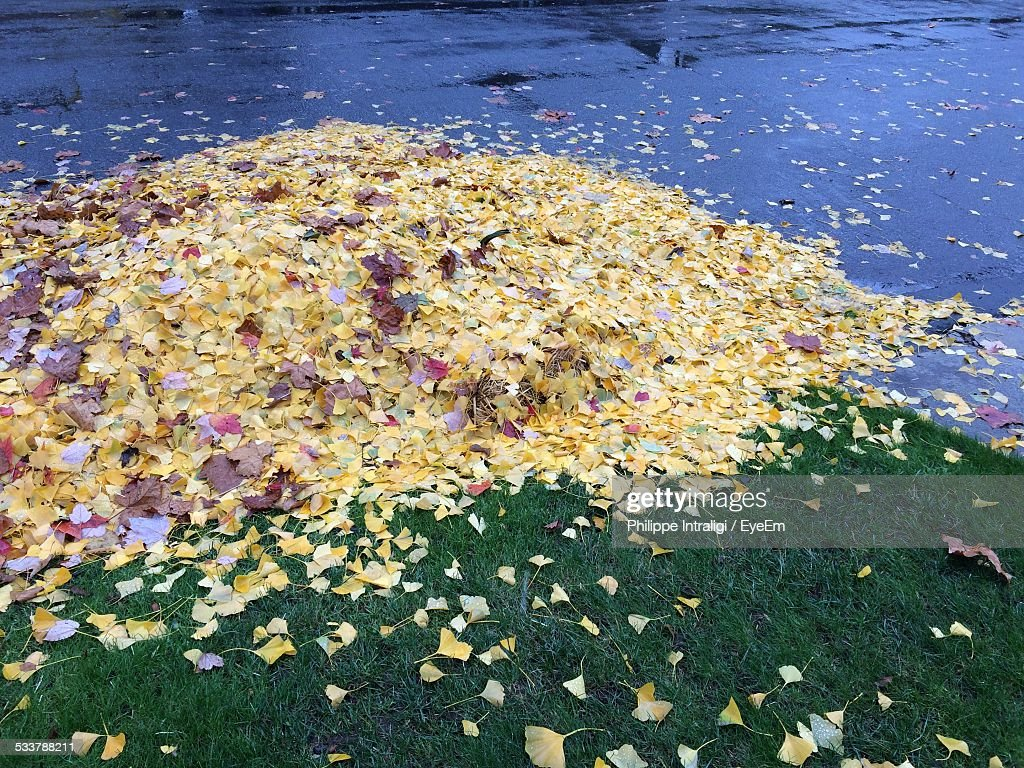 Stacked Autumn Leaves : Foto stock