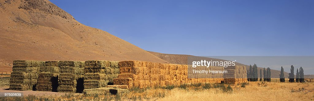 Stacked bales of alfalfa, mountains beyond : Stock Photo