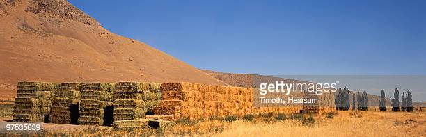 stacked bales of alfalfa, mountains beyond - timothy hearsum stock photos and pictures