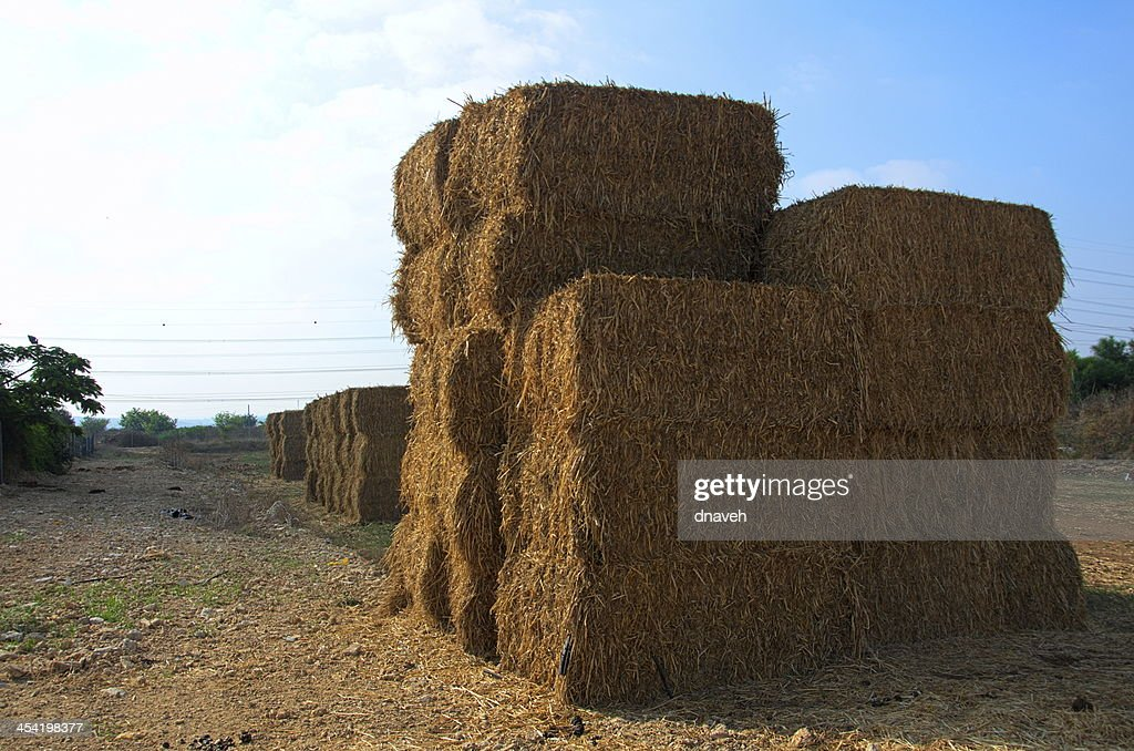 Stacked blocks of dry hay at a farm in Israel : Stock Photo