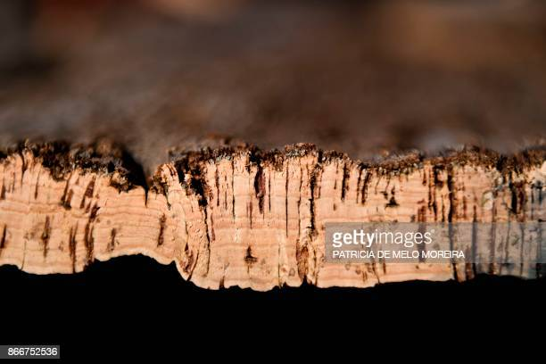 Stacked raw pieces of cork are pictured at Amorim Florestal cork production factory at Coruche in Ribatejo central Portugal October 23 2017 In a...