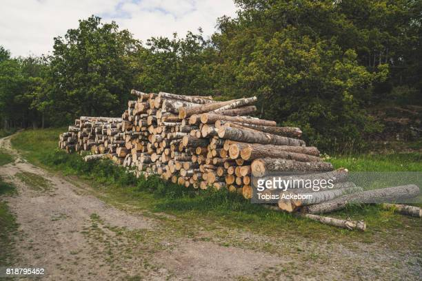 stacked timber logs - ceppo foto e immagini stock