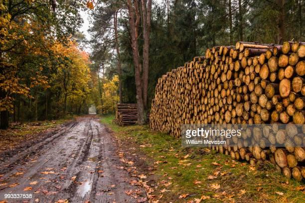 stacked tree trunks - william mevissen stockfoto's en -beelden