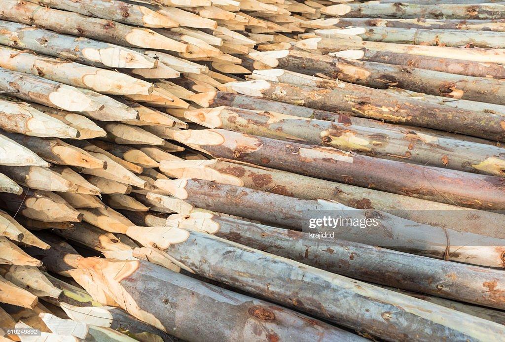 Empilhados de Madeira de pinheiro Madeira : Foto de stock