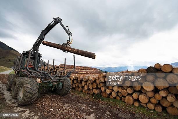 Stacking Cut Logs