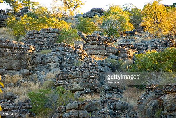 Stacks of Cambrian Marine Limestone known as Cambrian Pancakes Riversleigh Section Boodjamulla National Park northwest Queensland Australia