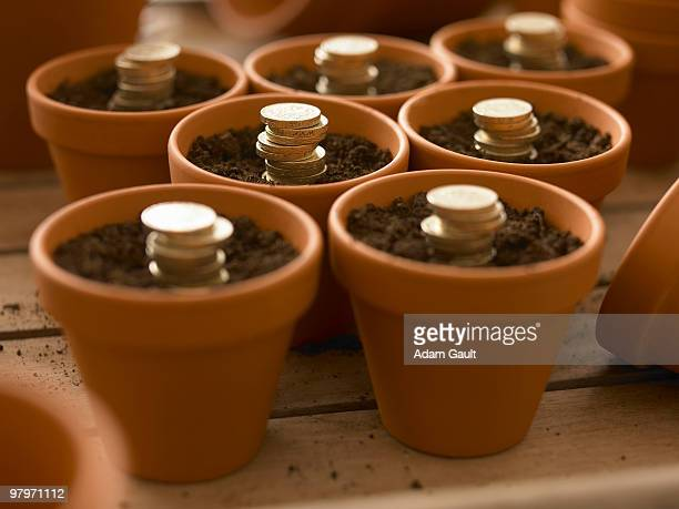 stacks of coins growing in flowerpots - money tree stock photos and pictures