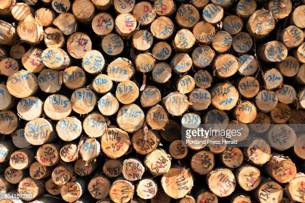 Stacks of logs at the former Verso Paper mill in Bucksport are marked with their diameter and lengt Maine Biomass Exports is utilizing the property...