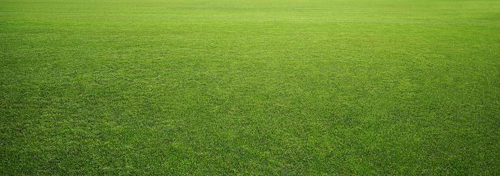 stadium grass 612852170
