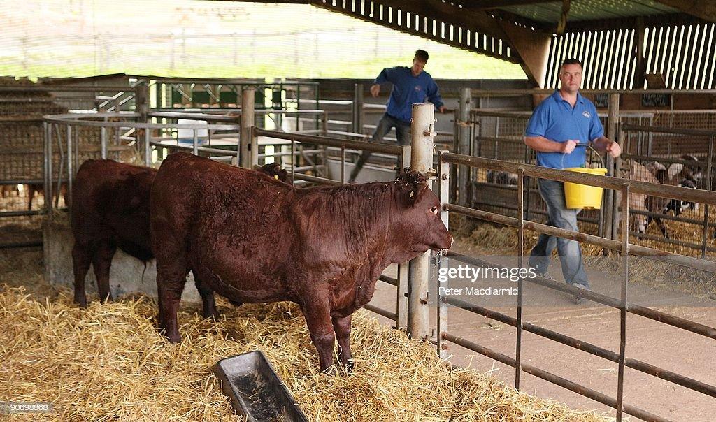 E.coli Outbreak At Children's Farm In Surrey : Nieuwsfoto's