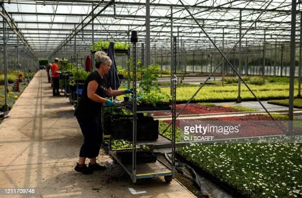 37 315 Plant Nursery Photos And Premium