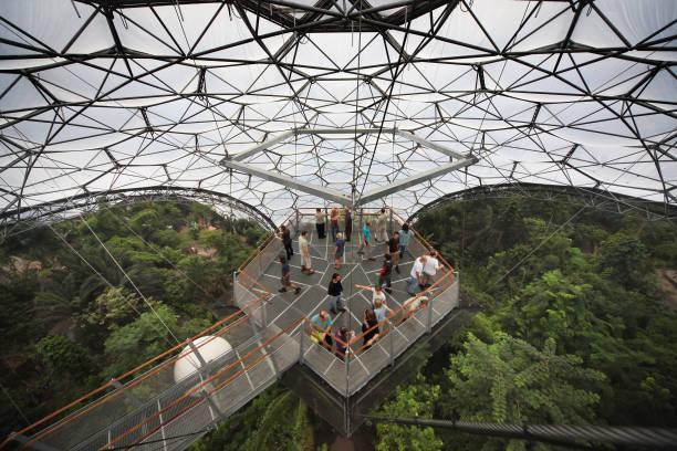 Eden Project Unveil Their New Forest Walk