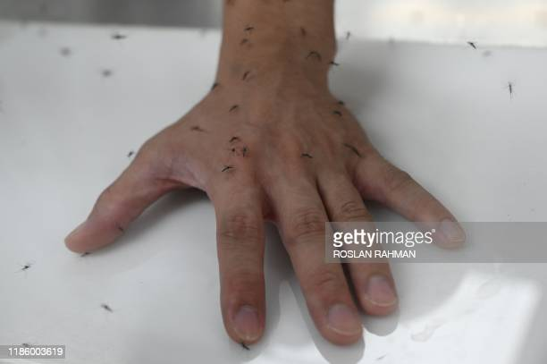 Staff exposes his hands in an enclosure filled with male Wolbachia-carrying mosquitoes in a demonstration at the newly opened National Environmental...