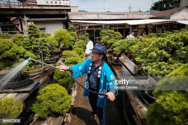 A staff from a garden center waters bonsai during the Bonsai Matsuri on May 3 2018 in Saitama Japan The Omiya Bonsai Village in Saitama founded in...