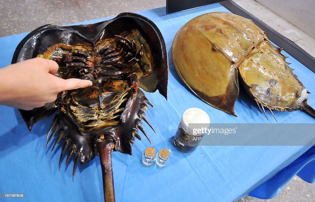 TAIWAN-HEALTH-SCIENCE-ANIMALS-MEDICINE : News Photo