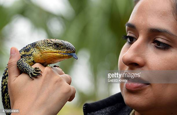 A staff member Julie Grizia holds a mother Blotched BlueTongue Lizard during the first time display of its seven babies at the Wild Life Sydney Zoo...