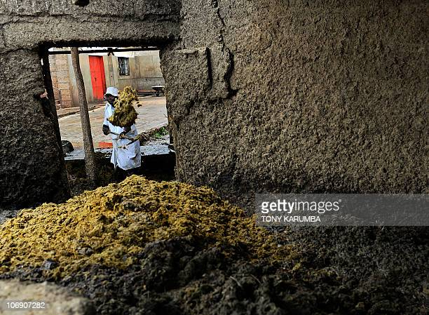 A staff member shovels cow dung on November 11 2010 from cows slaughtered at an abattoir at a Nairobi district The initiative which converts...