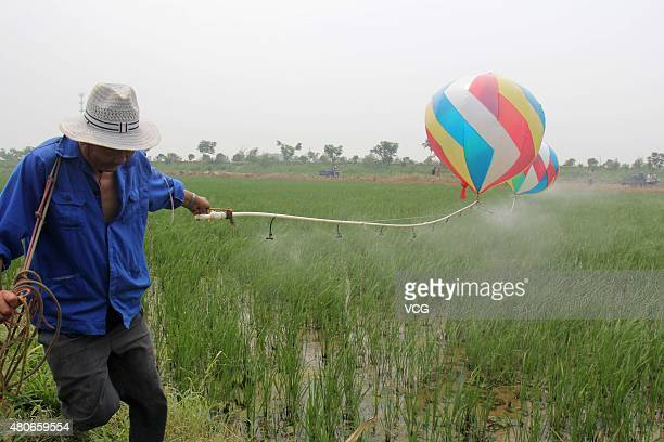 A staff of farmland belonged to Qingkou Agriculture Investment Company sprays pesticides on crops with Qi Mingjun's homemade helium balloon spraying...