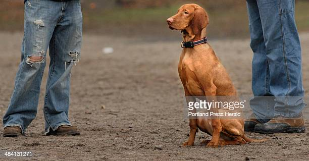 Staff photo by Doug Jones Wednesday Nov 29 2006 Ben Wheeler's seven month old Vizsla a short haired Hungarian breed will be wearing a sweatshirt the...