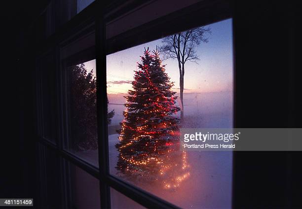 Staff Photo by Fred J Field Sun Dec 16 2001 Red white and blue lights adorn this 30foot spruce in this view at dusk through a foggy window at the...