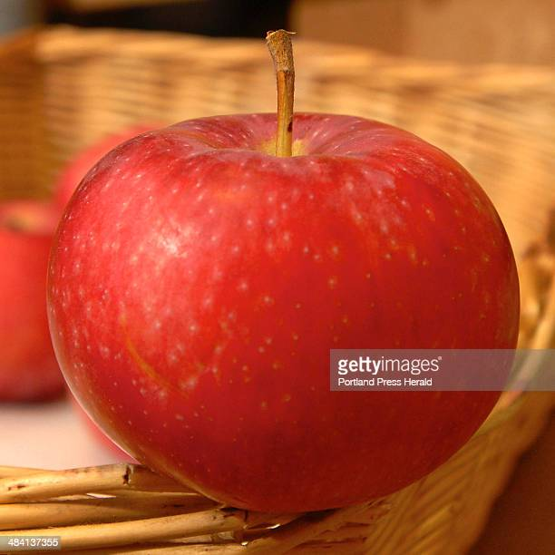 Staff Photo by Gordon Chibroski. August 28, 2006. -- Maine Food Products. Red Gravenstein Apple from Sweetser Farm in Cumberland, Maine. Courtesy of...