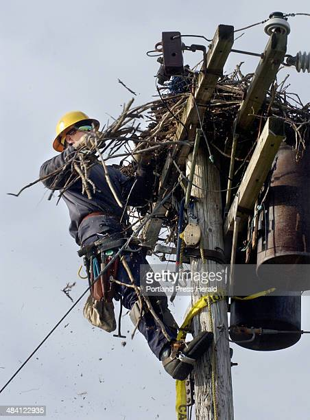 Staff Photo by Gordon Chibroski Thursday December 9 2004 Hector Picard linesman for CMP removes an old osprey nest near the Back Cove trestle next to...