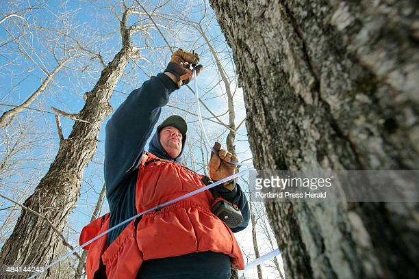 Staff photo by Gregory Rec Rodney Hall taps maple trees on land owned by his family in East Dixfield on Friday February 23 2007