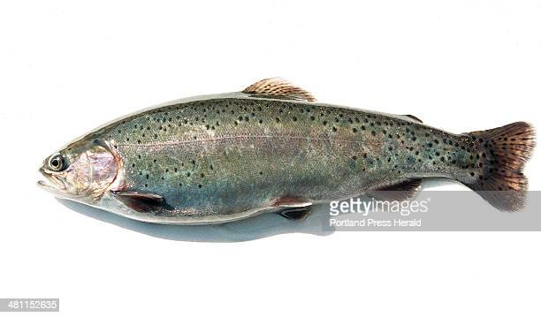Staff Photo by Herb Swanson Sun Mar 25 2001A rainbow trout at the hatchery in Gray