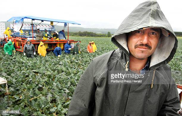 Staff Photo by John Ewing 08/10/06 Foreman Gregorio Rojas leads a team of Mexican laborers working on crew A for the Smith Farm's broccoli harvest in...