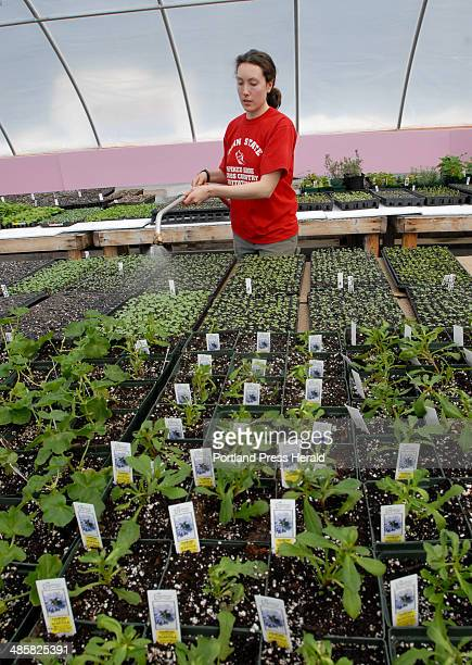 Alison Cole of Waterville an AmeriCorps member who is working at Rippling Waters Farm in Standish waters plants in the greenhouse Friday March 14 2008