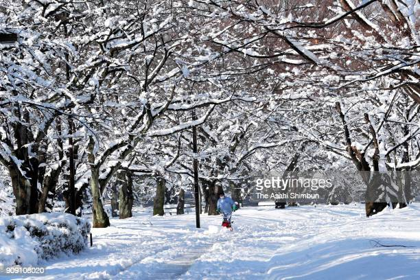A staff remove snow from a path at Yoyogi Park on January 23 2018 in Tokyo Japan The snowstorm affected traffic and public transport in the capital...