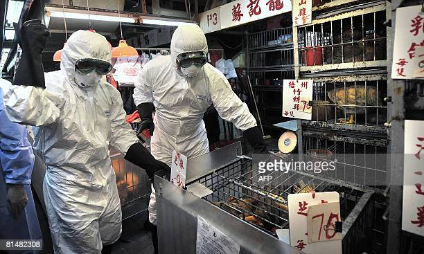 Staff wearing protective clothing cull chickens in a Sham Shui Po market after the deadly H5N1 bird flu virus was found in samples collected from the...