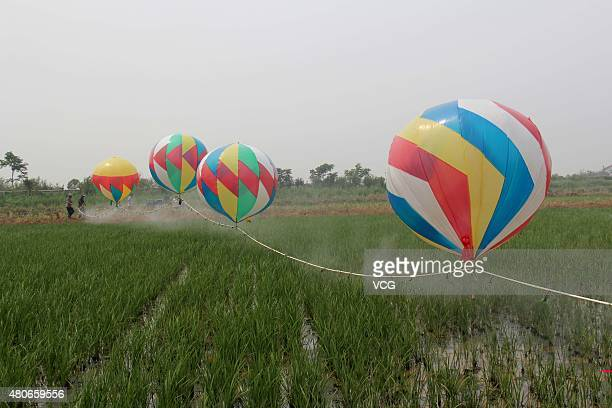 Staffs of farmland belonged to Qingkou Agriculture Investment Company spray pesticides on crops with Qi Mingjun's homemade helium balloon spraying...