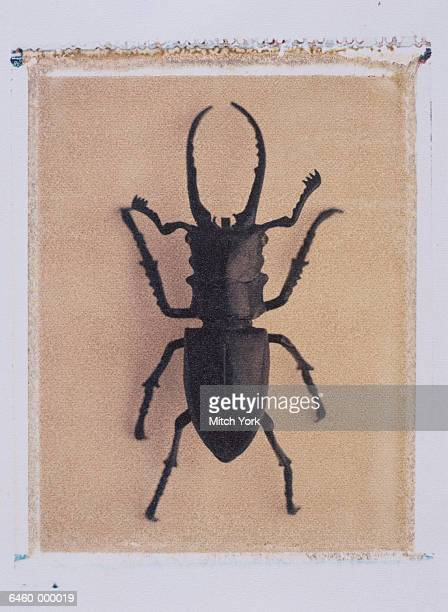 stag beettle - beetles with pincers stock pictures, royalty-free photos & images