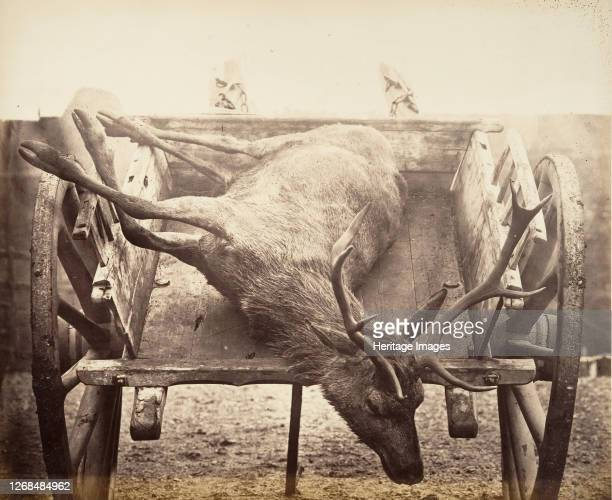 Stag in Cart circa 1858 Artist Horatio Ross
