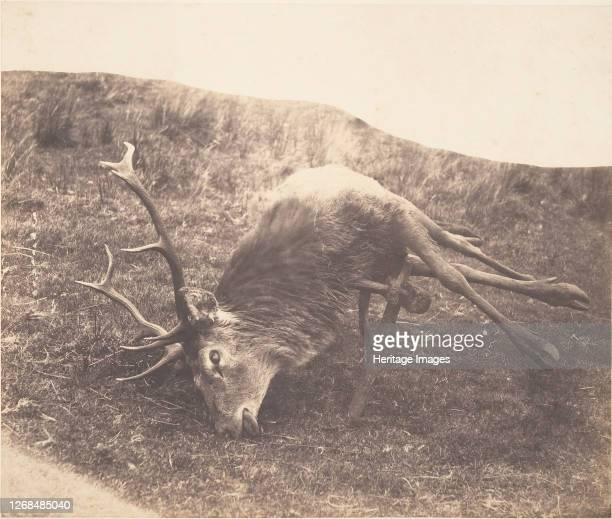 Stag Shot by Mrs. Ross, circa 1857. Artist Horatio Ross.