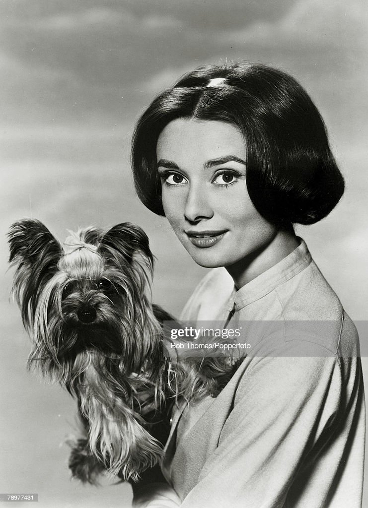 circa 1950's, Actress Audrey Hepburn, portrait, and dog, Audrey Hepburn, (1929-1993) born in Brussels, a truly international star from a cosmopolitan background, starred in many films, eg, 'My Fair Lady' and 'Breakfast at Tiffany's'