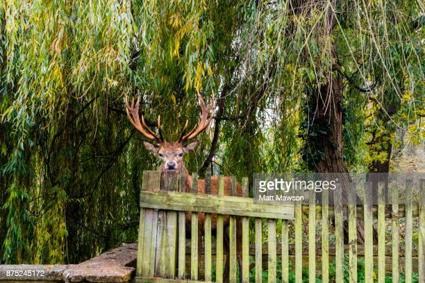 Stage in Royal Bushy Park South West London UK