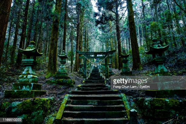 staircase amidst trees in forest - kumamoto prefecture stock pictures, royalty-free photos & images