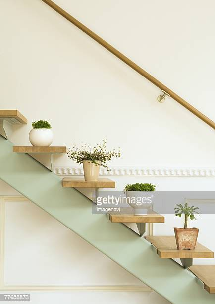 Staircase and potted plants