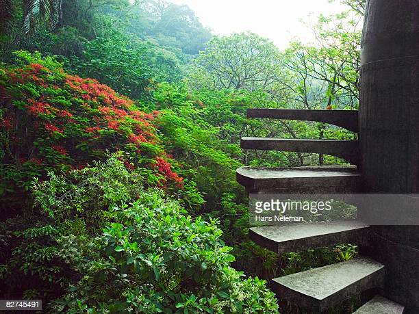 staircase in the forest - las posas stock pictures, royalty-free photos & images