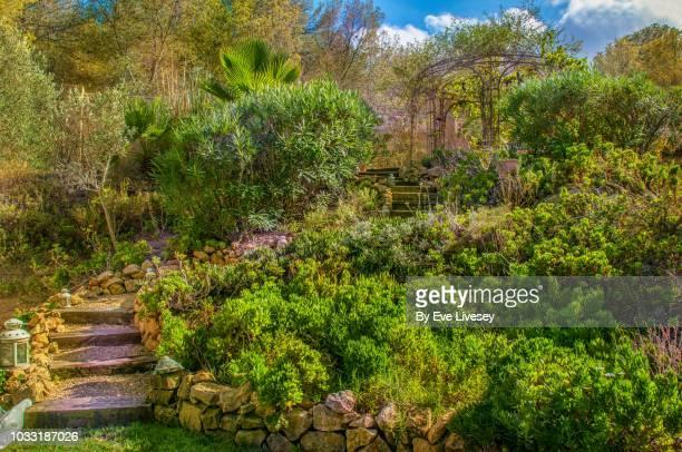 staircase to the pergola - tropical tree stockfoto's en -beelden
