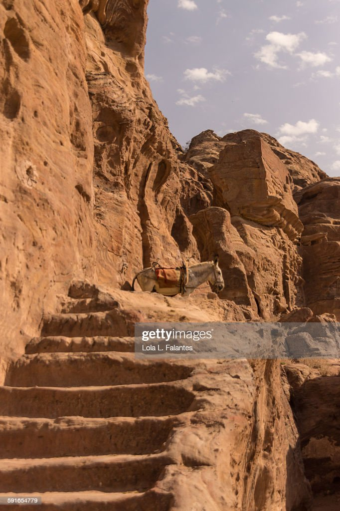 Stairs and mule in Petra : Stock-Foto
