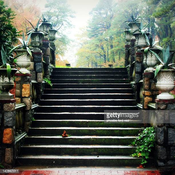 stairs in mist - norfolk virginia stock pictures, royalty-free photos & images