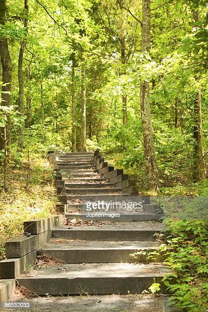 Stairs in woods