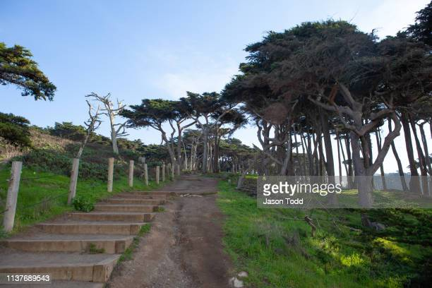 stairs leading up through coastal cypress tree forest - jason todd stock photos and pictures