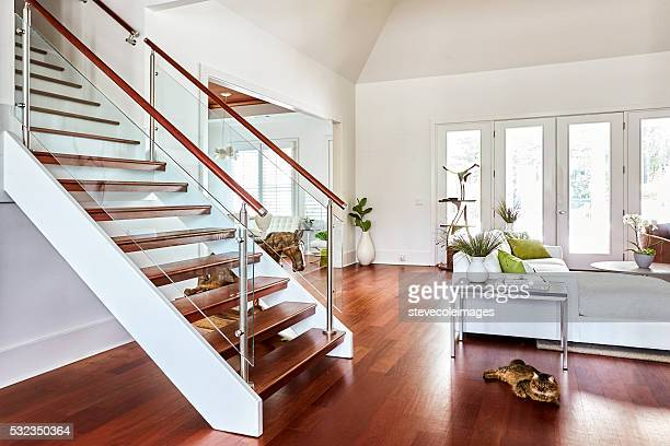stairs - hardwood stock pictures, royalty-free photos & images