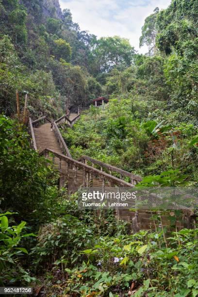 stairs to tham chang cave in vang vieng - tropical tree stockfoto's en -beelden
