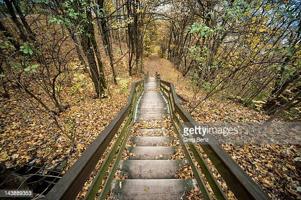 Stairway into woods